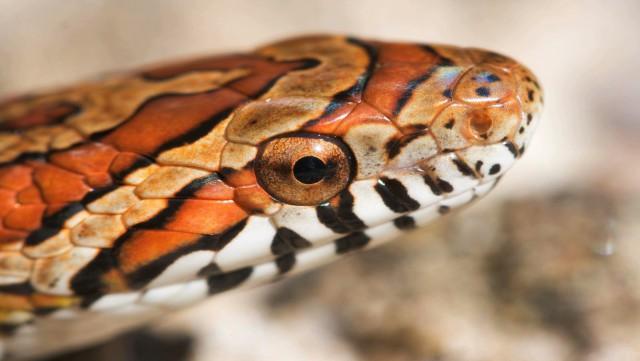 Insolite : un serpent capturé rue de la Vieille Cense à Hélécine