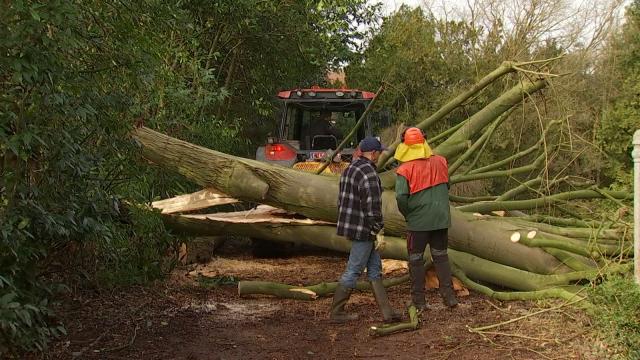 Ittre : les arbres n'ont pas résisté à Ciara