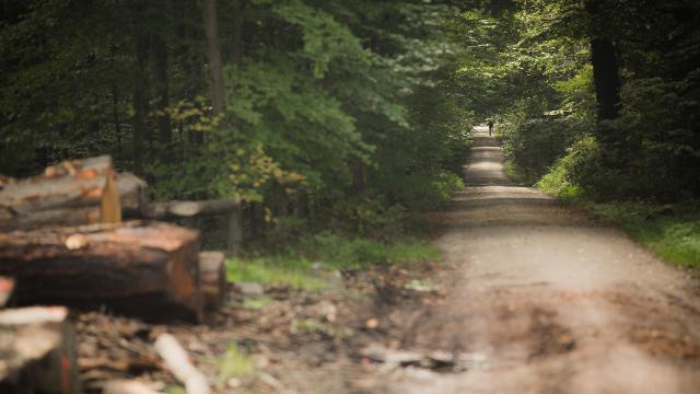 Journée internationale des forêts : Préservons la forêt de Soignes, ce joyau