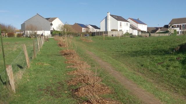 Plus de 200 arbres et arbustes plantés par les habitants de la Relevée
