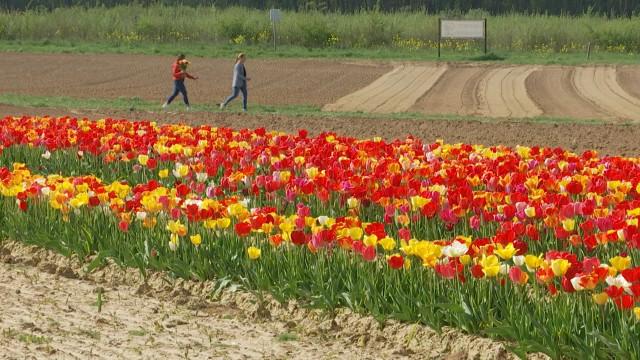 testNouveau champ de fleurs à couper àJodoigne