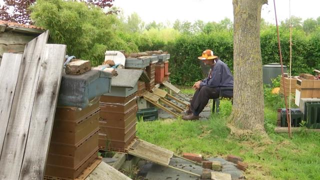 testPierre-Pol Vincke contemple le monde fascinant des abeilles