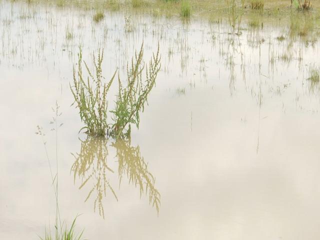 Plan de lutte contre les inondations à Genappe : où en est-on?