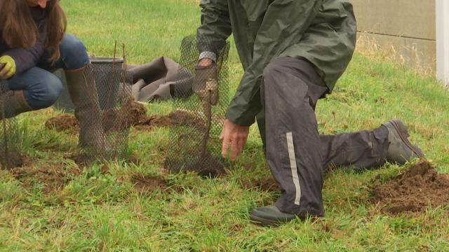 Opération Mille feuilles : 60 buissons supplémentaires plantés cet automne