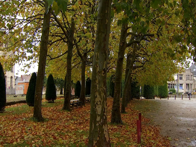 """Repris comme """"remarquables"""", les arbres du parc des Récollets sont sauvés"""