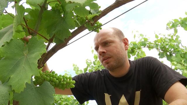 testLe premier vin effervescent belge biodynamique créé à Tubize