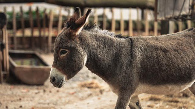 """Un agriculteur retrouve son âne mort à Lasne : """"Tenez vos chiens en laisse"""""""