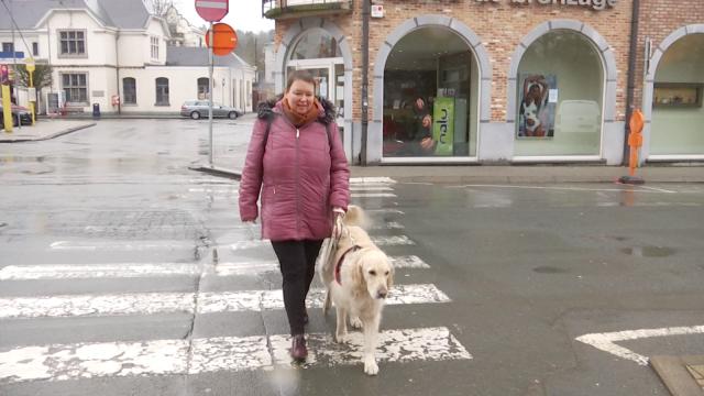 Un chien-guide, une aide si précieuse pour les personnes malvoyantes !