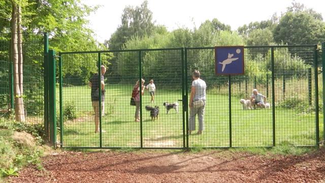Une aire de jeux pour les chiens sans laisse au Bois des Rêves