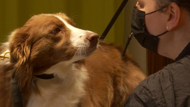 Une animalerie éthique ouvre ses portes à Jodoigne