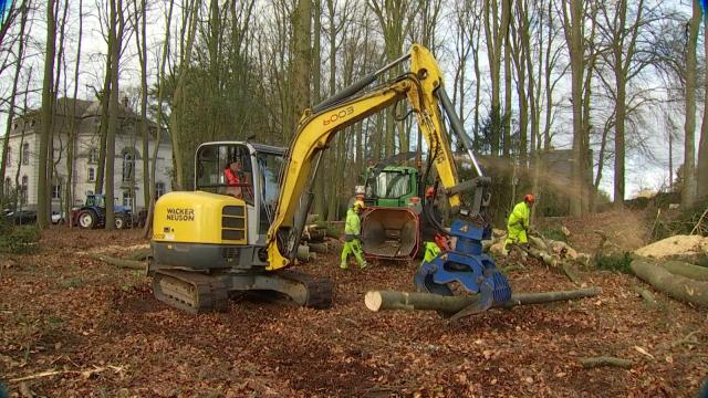 testUne trentaine d'arbres abattus au Parc du Cheneau