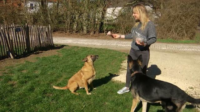 testVoici comment ne plus se faire mordre par un chien !