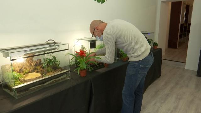 Walter a fait de sa passion pour les terrariums, son métier